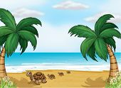 pic of carapace  - Illustration of turtles at the seashore - JPG