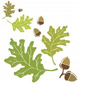 Oak leaves and acorns motif. EPS10 vector format with space for your text.