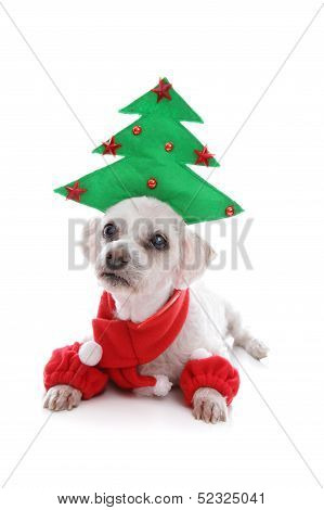 Puppy Dog Wearing Christmas Tree Hat