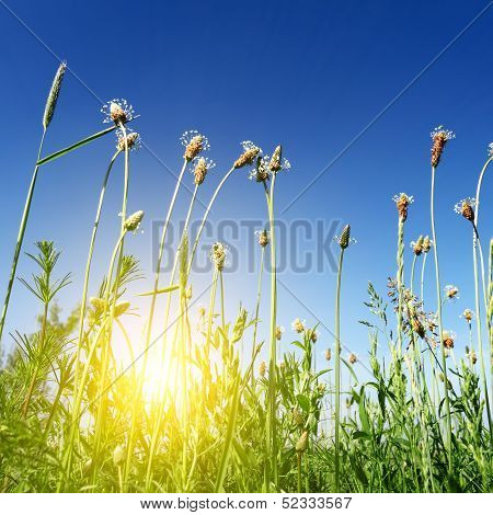 Sun Light In Green Spring Grass