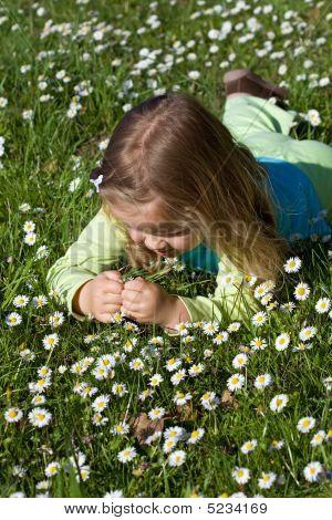 Little Girl Laying Among Little Wildflowers