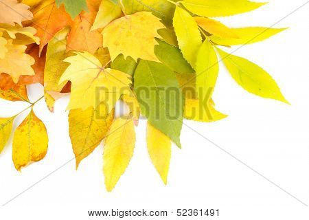 Bright autumn leafs isolated on white