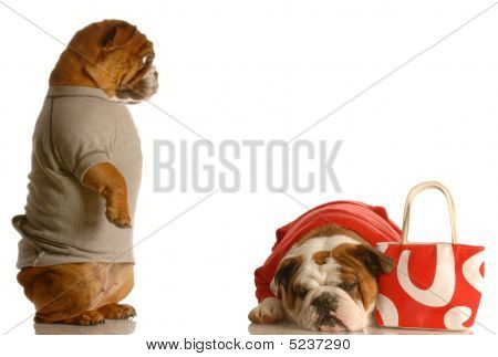 Bulldog Couple Spending Too Much Money