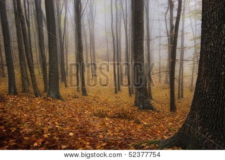 Autumn in a forest with fog trough trees