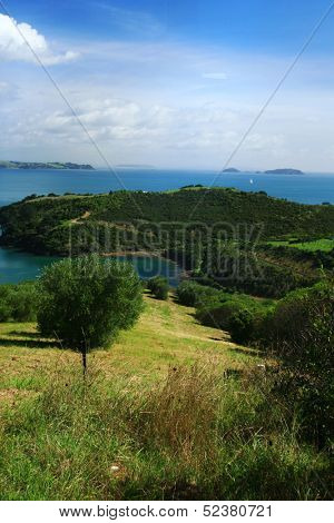Landscape at Waiheke, New Zealand