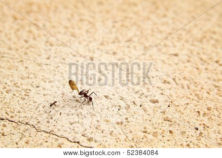 Ant holding a little part of a leaves and a little ant having a discussion