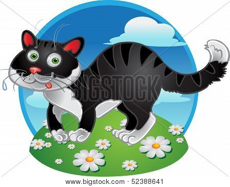 Black fun cat on color background