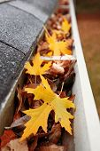 stock photo of gutter  - Gutter full of leaves - JPG