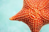 Close up of red starfish in a tropical water