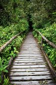 Wooden Walking Way In Hill Evergreen Forest Of Doi Inthanon Chiangmai Northern Thailand