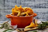 picture of chanterelle mushroom  - Chanterelle - JPG