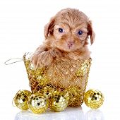 stock photo of fluffy puppy  - Puppy in a wattled basket with New Year - JPG