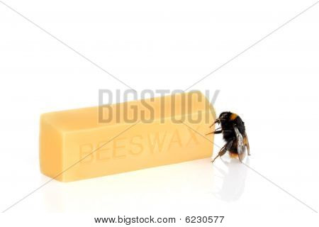 Bumble Bee And Beeswax