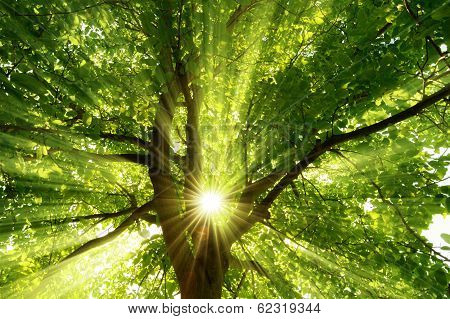 Sunrays Dramatically Falling Through A Tree