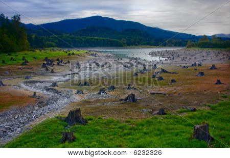 Cut Tree Stumps Along Drying Riverbed