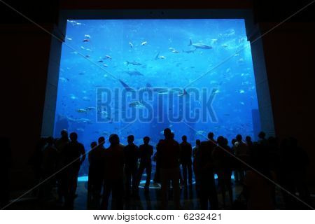 Aquarium Atlantis on the Palm Island, Dubai