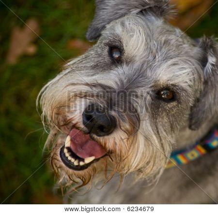 Smiling Happy Dog Close Up