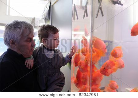 Grandfather With Grandson Looking At Fishes
