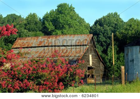 Barn and Crepe Myrtle