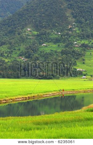 Farmers in the water reflection,fewa lake,nepal