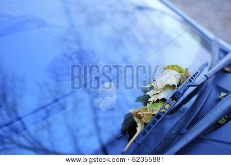Fallen Leaves On A Car Window