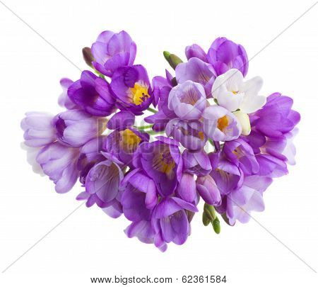violet  freesias flowers posy