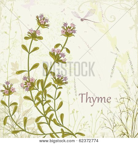 Herb thyme on floral background