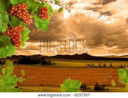Grapevine and sunset landscape