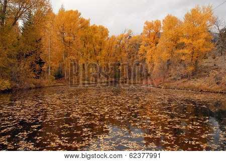 Autumn Foliage: Aspen Trees reflecting in lake