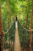 stock photo of canopy  - Canopy walkway - JPG