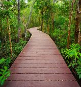 stock photo of pom-pom  - Wooden bridge to the jungle Tha pom mangrove forest KrabiThailand - JPG