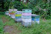 stock photo of swarm  - commercial beehives or apiary with swarm of bees - JPG