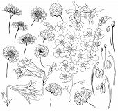 pic of forget me not  - Hand drawn flowers - JPG