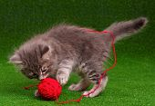 Cute baby kitten playing red clew of thread on artificial green grass