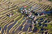 stock photo of luzon  - The world heritage Rice terraces in Batad northern Luzon Infugao province Philippines - JPG