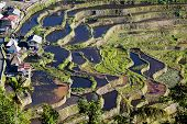 foto of luzon  - The world heritage Rice terraces in Batad northern Luzon Infugao province Philippines - JPG