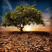 Global Warming Concept. Lonely Green Tree Under Dramatic Sky At Drought Cracked Desert