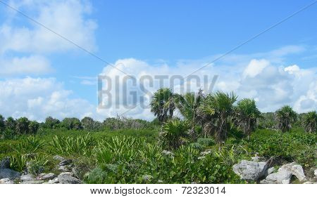 Tropical vegetation in the Caribbeans Mexico