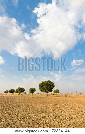 Agricultural Ploughed Land Field In Desert