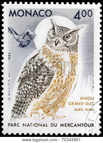 Indian Great Horned Owl