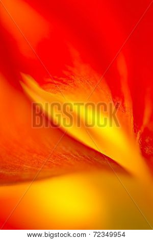 Tulip's Flame