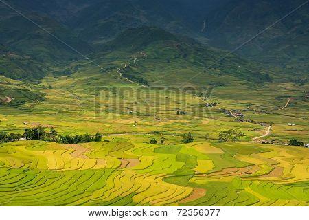 Rice fields on terraced at Mu Cang Chai, Yen Bai, Vietnam.