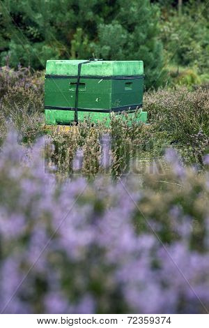 Beehive On The Blooming Heath In Holland