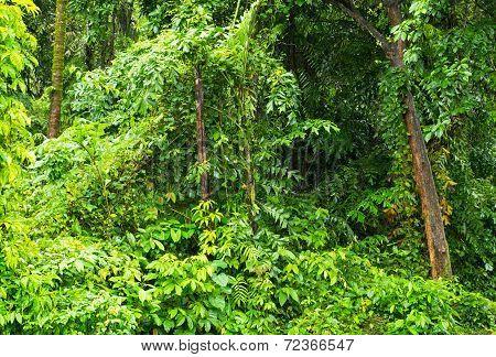 Tropical Rainforest In Myanmar