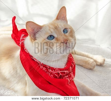 Cat In A Bandana1