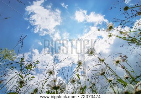 Sunny Day At Summer Meadow With Wildflowers Under Blue Sky