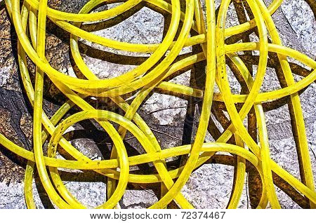 Yellow water hose