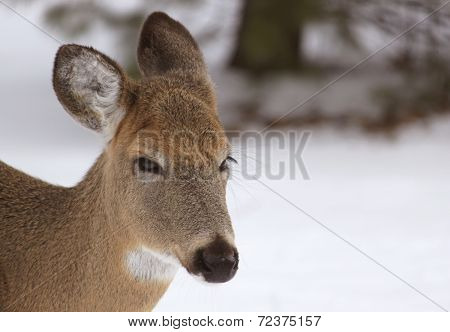Oh, Deer