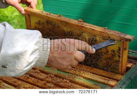 Beekeeper Checking Honeycomb