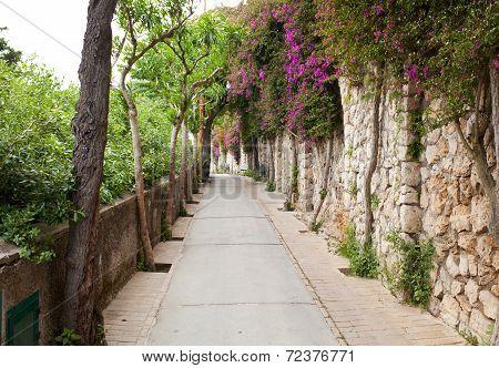 Via Tragara, The Famous Street Of Capri